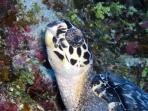 Cozumel is abundant with sea turtles