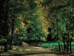 Foresta Umbra, 15 km da Monte Snat'Angelo. una tappa obbligata per gli amanti della natura!