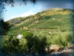 Our Olive Groves