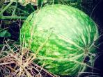 Frutos de nuestro huerto