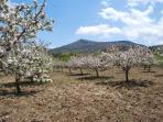 Blossomed apple trees at the plateau!