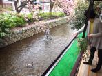 Enjoy feed the ducks from the balcony!!