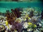 Great Snorkeling Reef in Double Bay