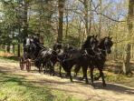 Weekend fun in Burley II - Carriage Driving Rally