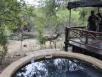 Kudu with pool and elevated deck.