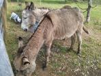 Los legendarios burros de la Isla de A Toxa / Toxa Island's legendary donkeys
