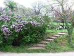 steps to the upper garden in spring time