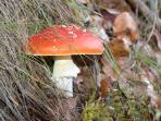 Champignons, brame du cerf, paysage d'automne sont autant de plaisir en arrière saison