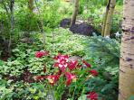 Foxtail Gardens