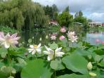 The Lotus Lake at The Tropical Gardens in St Cyr en Talmondais