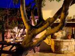 Alfresco Dining in the Garden at Night