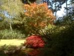 Autumn colors in garden