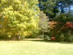 More garden photos