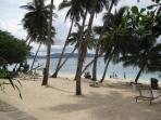 Palmtrees on the White Beach