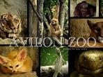 Avilon Zoo, 5-7 minutes drive