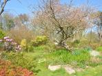 Looking towards the upper garden with the cherry just coming into blossom
