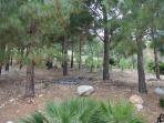 Pineta circostante la casa - Pino trees surrounding the house