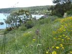 Spring flowers on the cliff path towards Konnos Bay. Photo taken mid March