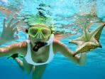 Snorkeling and Suba Diving is some of best in world