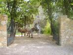 Le Parc des ânes