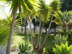 Shaded garden adjacent to swimming pool