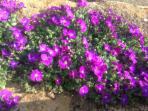 Springtime in Grimscote