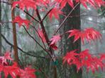 It's beautiful even when it rains...