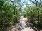 Bush path to the beach