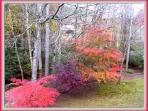 fall in yard. Winter, fall, spring or summer, it doesn't matter at all--- it so beautiful.