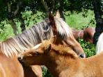 ...ou encore, tentez de parler à l'oreille des chevaux en liberté dans la plaine des moutons