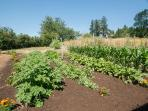 Two large property gardens grow in the summer months. Ask whats in season for your next meal!