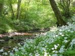 Sit beside Moniack burn in Affleck's woodland garden..fall asleep to the sound of the stream!