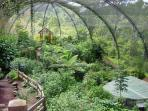 Butterfly Garden at La Paz Waterfall Gardens 35 minutes away. Tour inc transpo lunch entrance -  $85