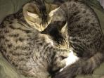 Host's two kitties, cuddling for a cat-nap!