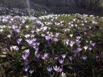 La primavera a Corsagna / Springtime