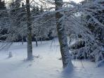 La jardin en hiver