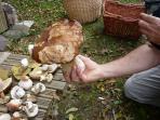 ...ou bien choisissez la cueillette des champignons dans les bois environnants.