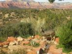 Given its openness, natural habitat and water, wildlife abounds at Talahogan...like this mule deer
