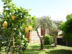 House 2 garden