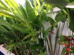 well maintained gardens (villa gardener)