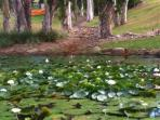 Lilypond on walk to beach through magnificent gardens
