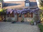 The Wisteria at its best