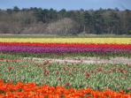Flower fields in the area