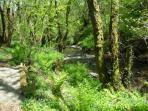 River running through woods