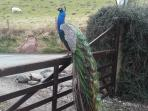 One of regular visitors on the gate.