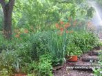 always something blooming in Sharon's gardens