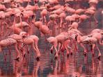 En el lago de rosa.