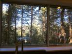 View of the forest from the kitchen sink