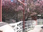 O apartamento fica próximo ao Parque das Cerejeiras - as flores florescem entre Julho e Setembro.