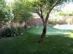 Backyard in the morning sun